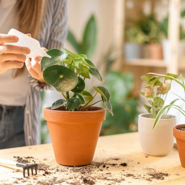 Así puede ayudarte el vinagre con tus plantas