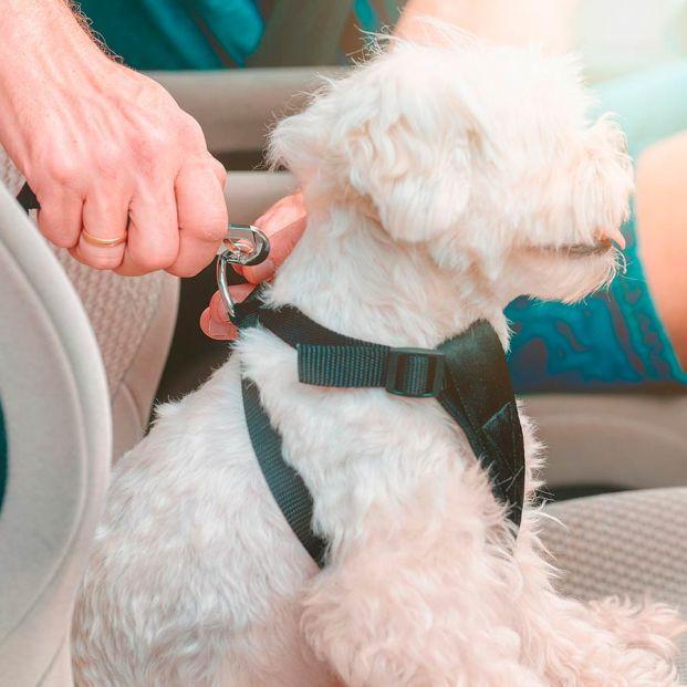 No todo vale para llevar a tu perro en coche: hay multas incluso cuando crees que lo haces bien
