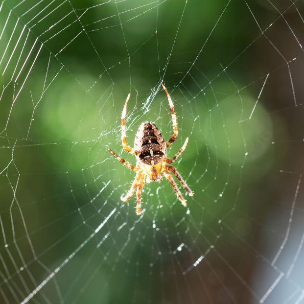 El truco casero infalible para expulsar a las arañas de casa