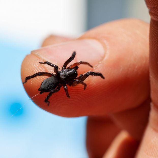 Las siete arañas más peligrosas de España