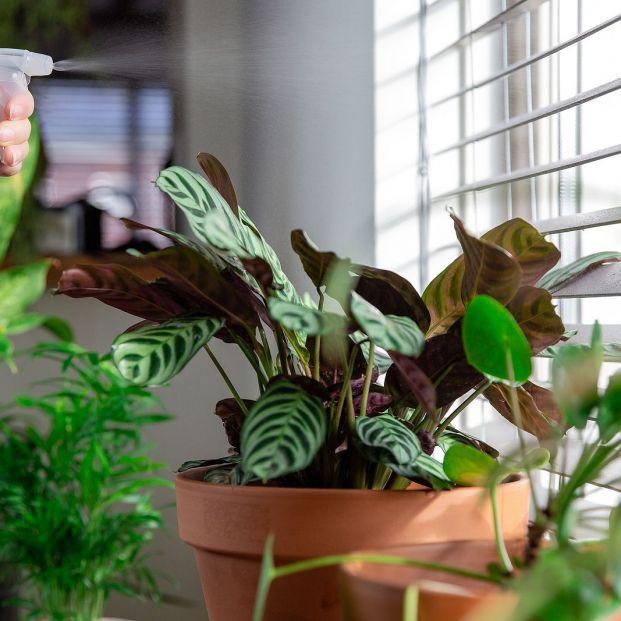 ¿Agua oxigenada para las plantas? Sí: Este y otros usos que desconoces Foto: bigstock