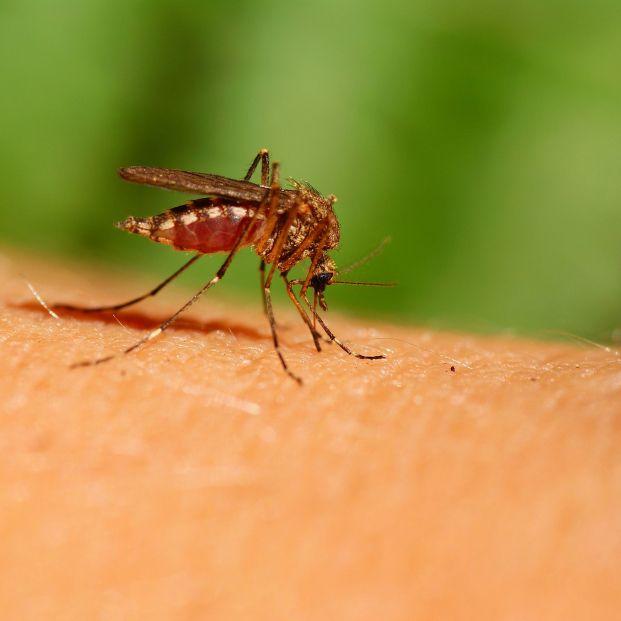 6 productos efectivos para repeler los mosquitos
