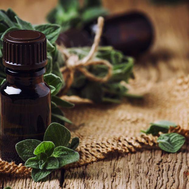 Aceite de orégano: previene el envejecimiento y ayuda contra las infecciones Foto: bigstock