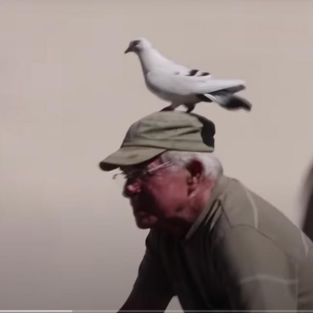 La entrañable amistad entre un jubilado y una paloma se convierte en viral. Captura de pantalla