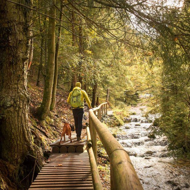 Alarga tu vida con solo 1.000 pasos al día Foto: bigstock