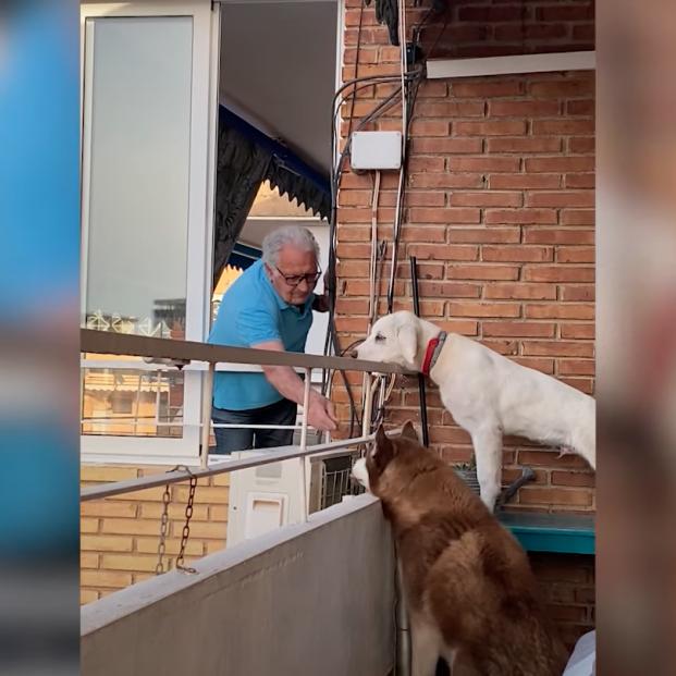VÍDEO: El conmovedor gesto de un hombre de 84 años con los perros de su vecina