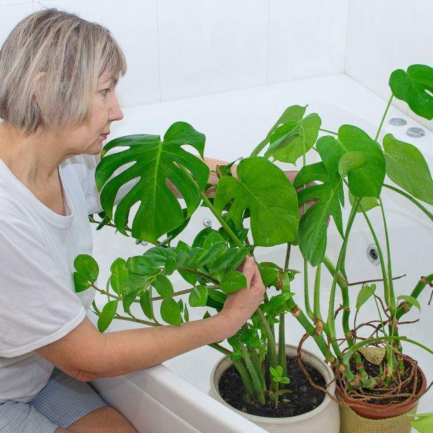 Trucos para que las plantas sobrevivan a tus vacaciones Foto: bigstock