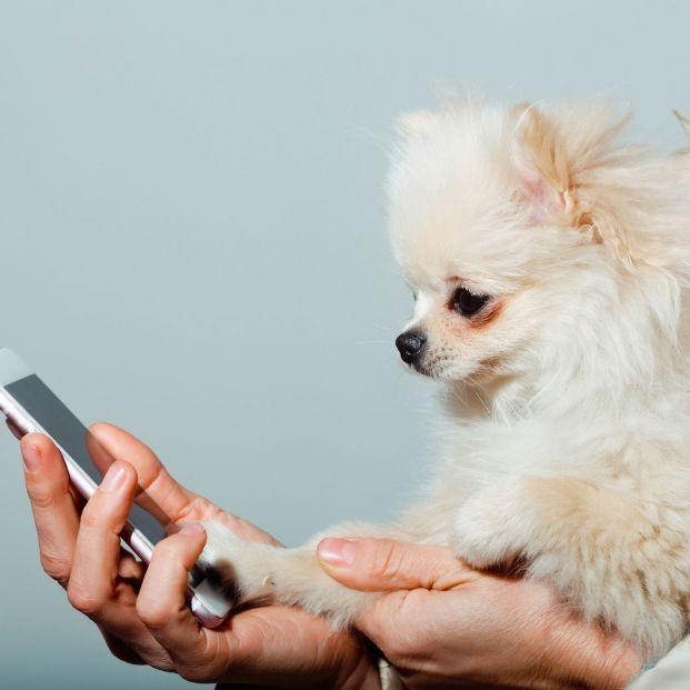 Aplicaciones cuidar mascotas (bigstock)