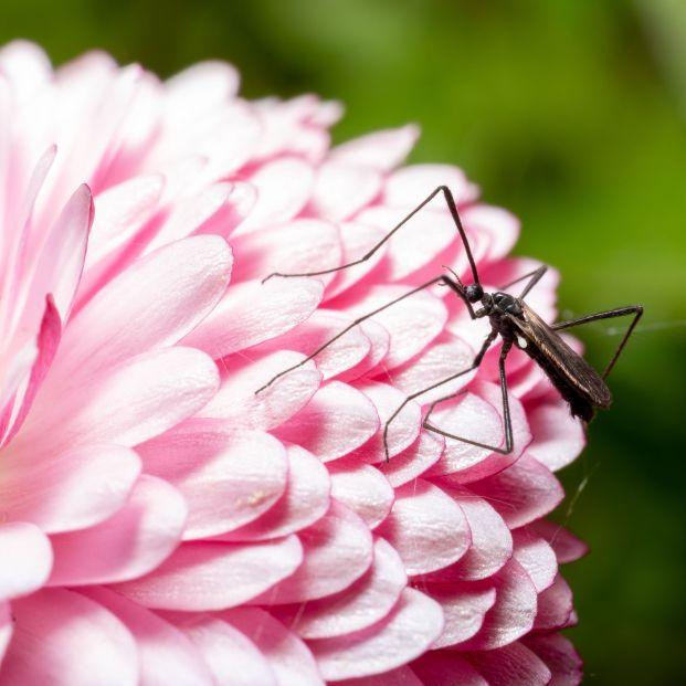Las mejores plantas antimosquitos para tener tanto dentro como fuera de casa