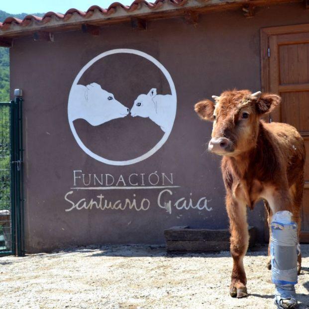 El amor por los animales, una prioridad en estos santuarios