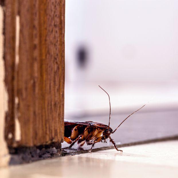 Cucarachas, paseantes de madrugada