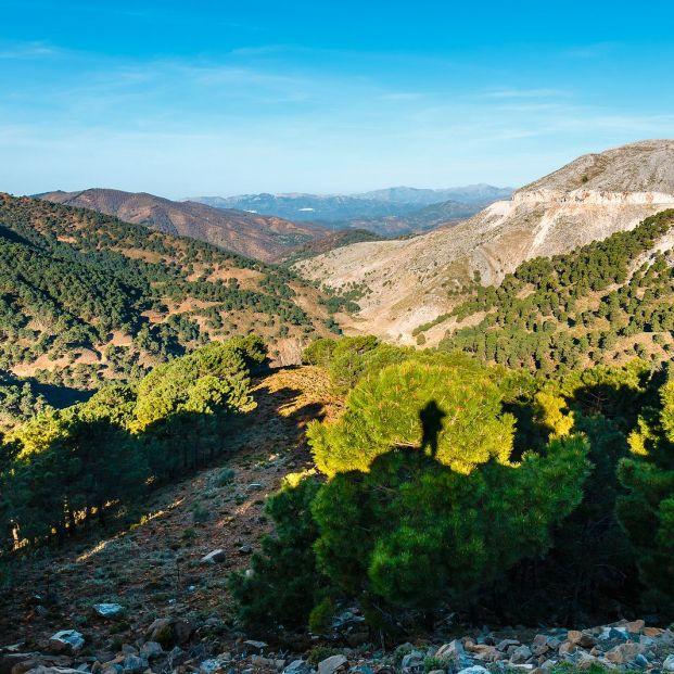 Conocemos la Sierra de las Nieves, nuevo parque nacional en Málaga. Foto: bigstock