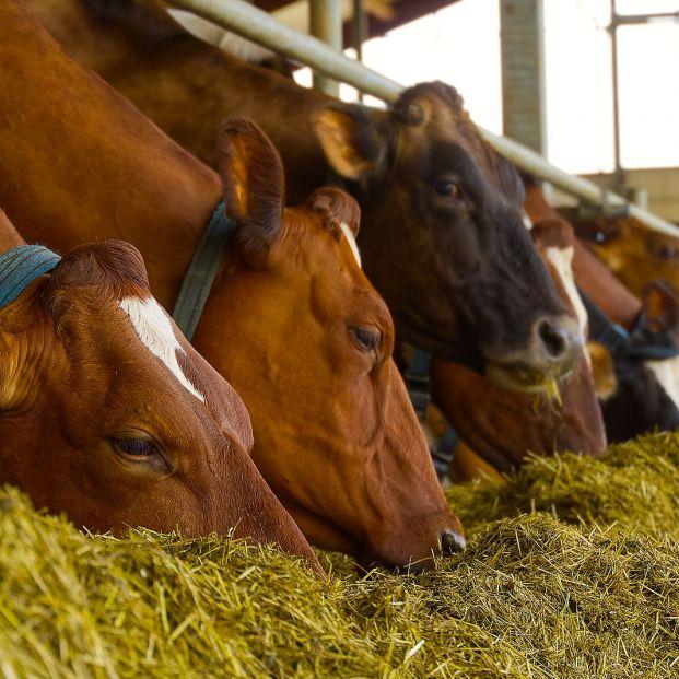¿La carne que comemos contiene antibióticos?