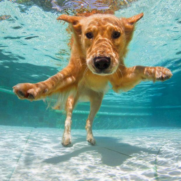 Las razas de perros a las que más les gusta el agua y la playa