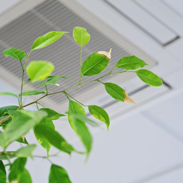 ¿Se puede utilizar para regar las plantas el agua que suelta el aire acondicionado? Foto: Bigstock