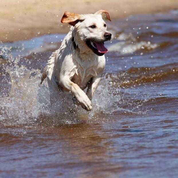 Verano 2021: las mejores playas para ir con tu perro