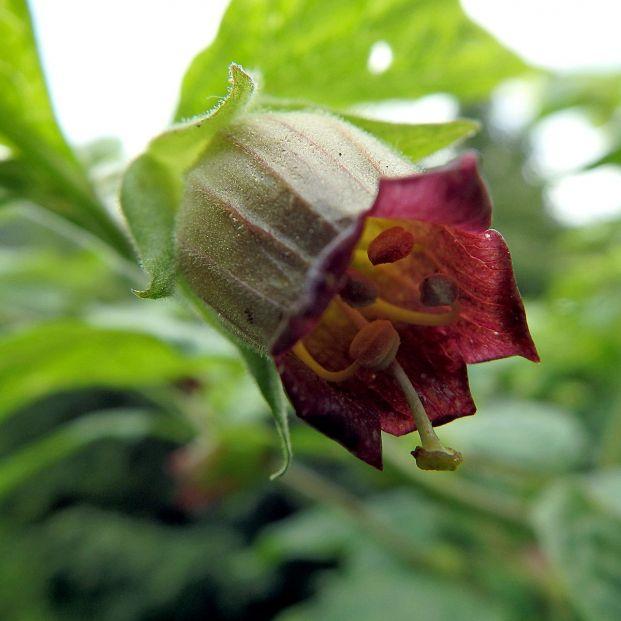 Plantas peligrosas (bigstock)
