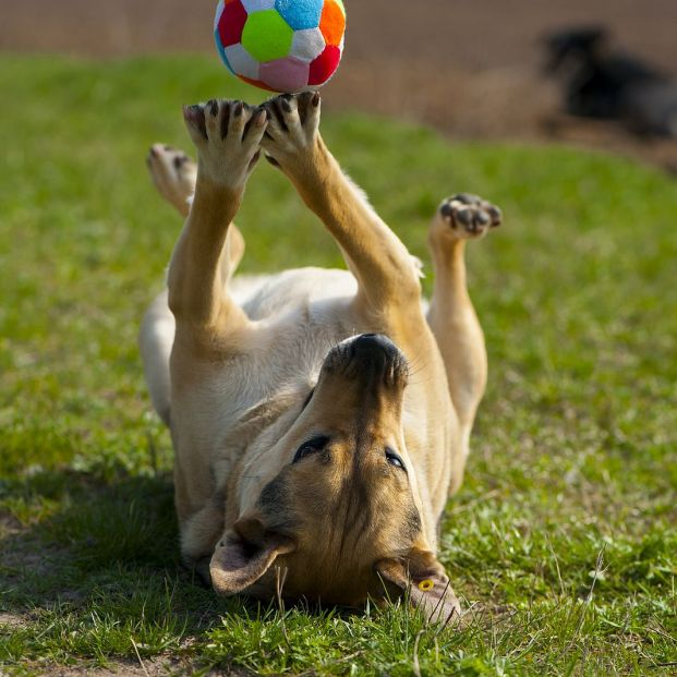 Juegos de estrategia y diversión para perros y gatos que encontrarás en Lidl (Foto Bigstock)