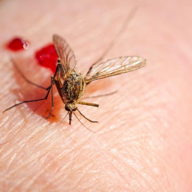 Este es el grupo sanguíneo que más atrae a los mosquitos