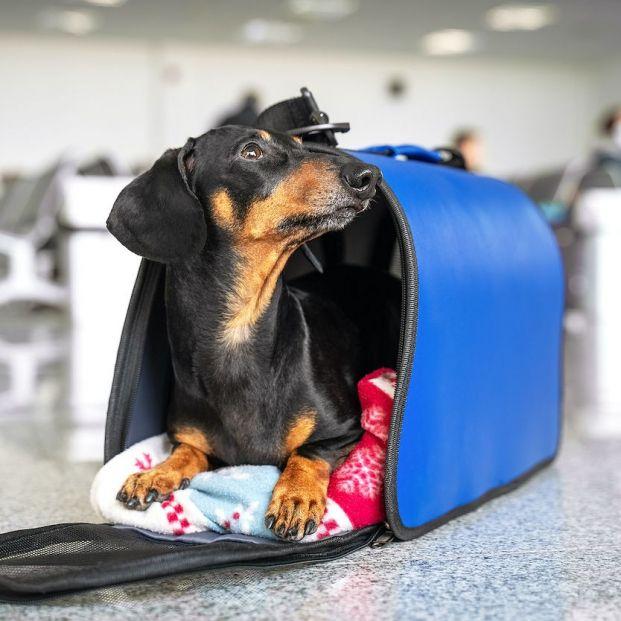 Viajar con perros: accesorios imprescindibles