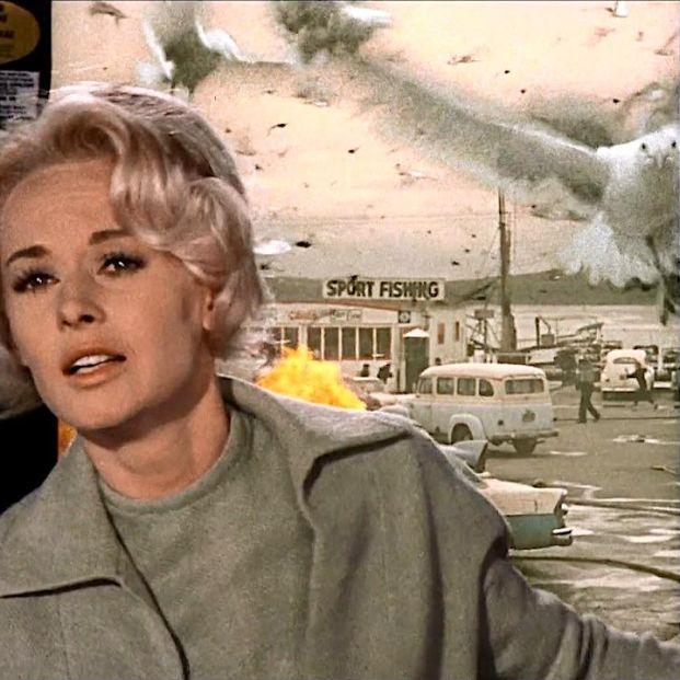 'Los pájaros', 'Tiburón' y otras películas de animales asesinos