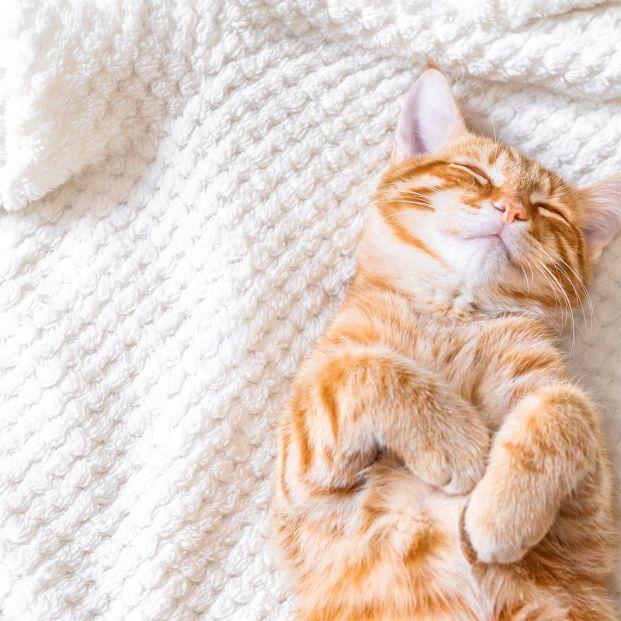 10 cosas que no sabías de tu gato (bigstock)