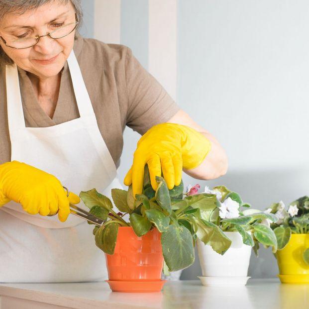 Con este truco sabrás si el problema de tus plantas son los pulgones