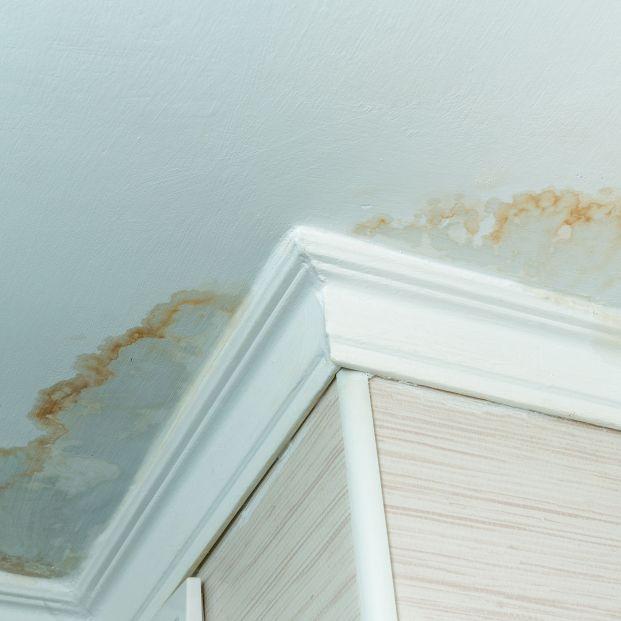 ¿El moho en las paredes es peligroso para la salud? (Bigstock)