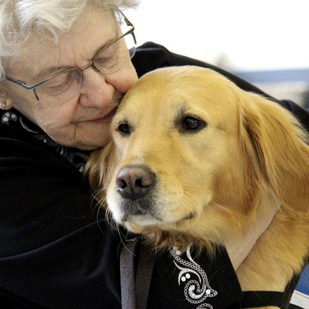 'Comfort dogs', perros entrenados para dar apoyo emocional en las situaciones de crisis (Foto: LCC K-9 Comfort Dog Ministry)