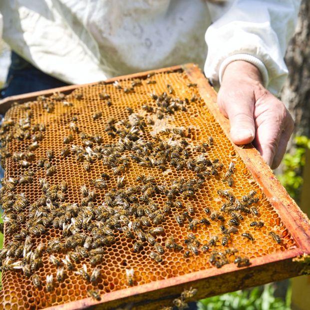 El nuevo test de coronavirus que pueden haber encontrado los científicos: las abejas (bigstock)