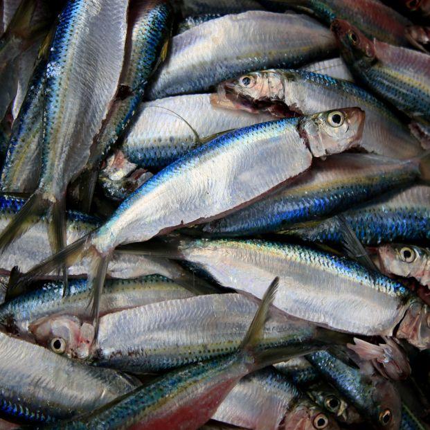 Para proteína, la sardina