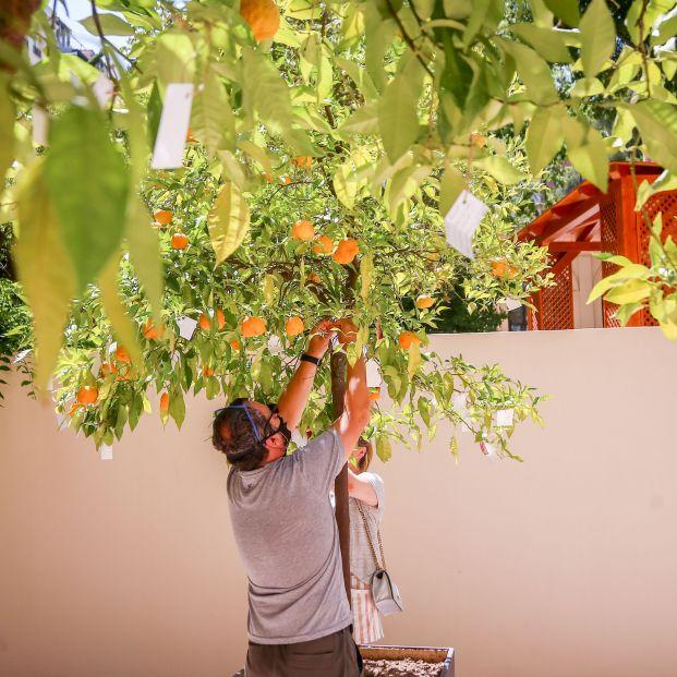 'Wish Tree', el proyecto interactivo de Yoko Ono para anudar deseos en ramas de naranjos. Foto: Europa Press