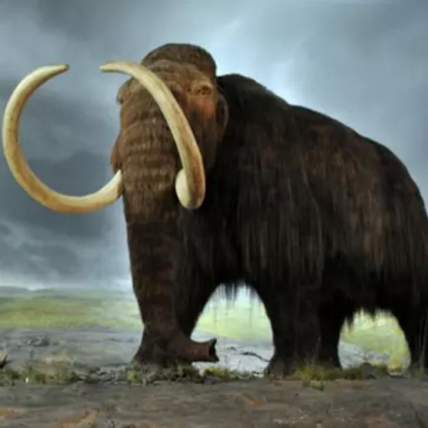 Descubren detalles asombrosos sobre la vida en Alaska de un mamut de hace 17.000 años. Foto: Europa Press