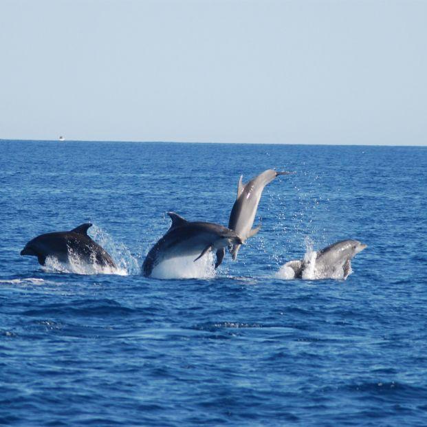 Los delfines mulares consumen menos calorías a medida que envejecen