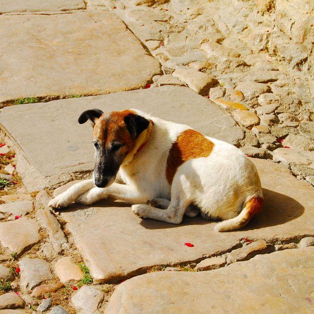 Denuncian al dueño de un perro que murió por estar expuesto a las altas temperaturas