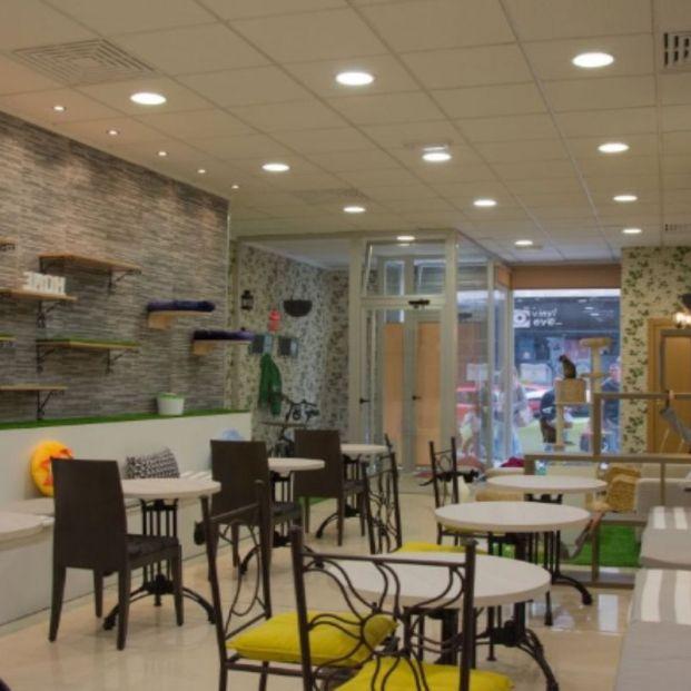 Cafeterías con gatos (https://www.elpassatgedelsgats.com/es/homepage/)