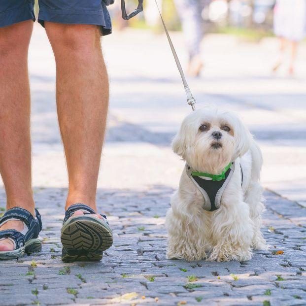 Errores que cometes cuando paseas a tu perro (Big Stock)
