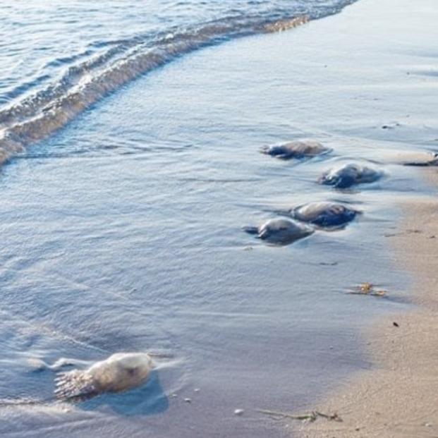 Sanidad insiste en la prevención frente a riesgos de la época estival como las picaduras de medusas. Foto: Europa Press