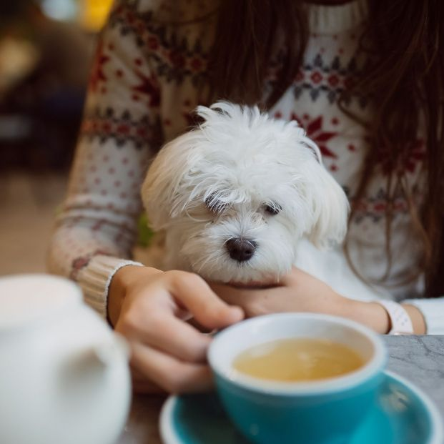 Aquí se admiten perros: los mejores bares y cafeterías para ir con tu mascota (Foto: Bigstock)