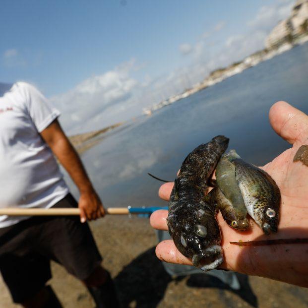 El Colegio de Geógrafos pide al Gobierno que tome medidas valientes para salvar el Mar Menor