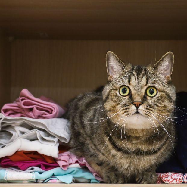 El truco para quitar los pelos de tu mascota de la ropa en la lavadora (Foto: Bigstock)