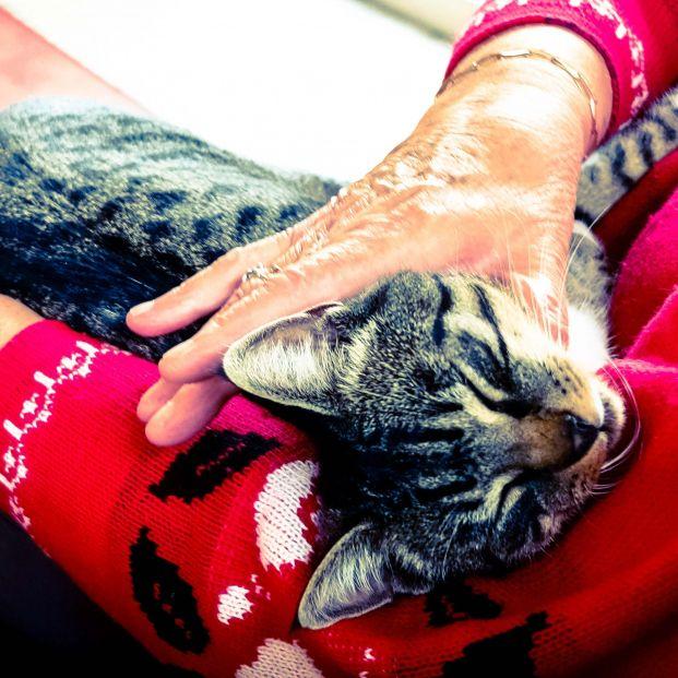 Cuándo un gato te muestra cariño (pexels)