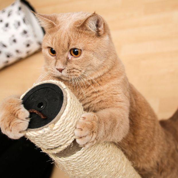 Los productos que no pueden faltar en casa cuando tienes un gato (Foto: Bigstock)