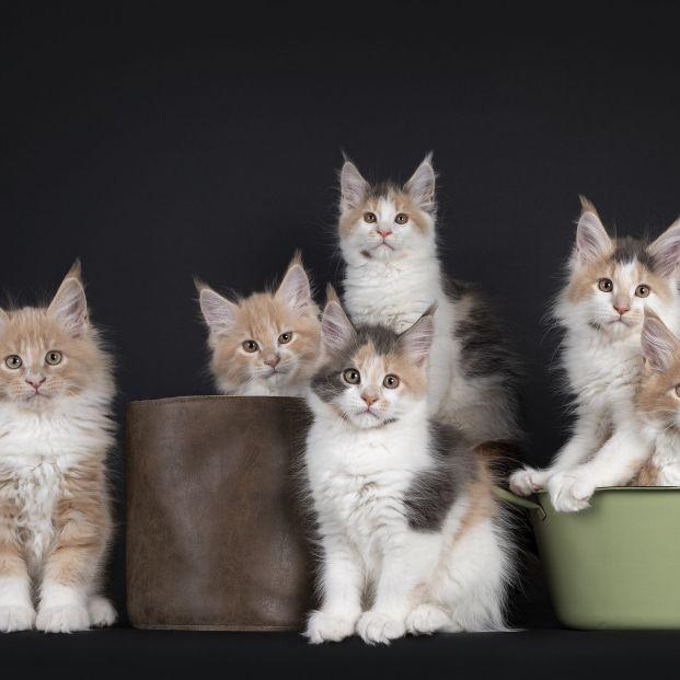 ¿Cómo definirías a tu gato? Estos son los 7 tipos que existen según su personalidad (Foto: Bigstock)