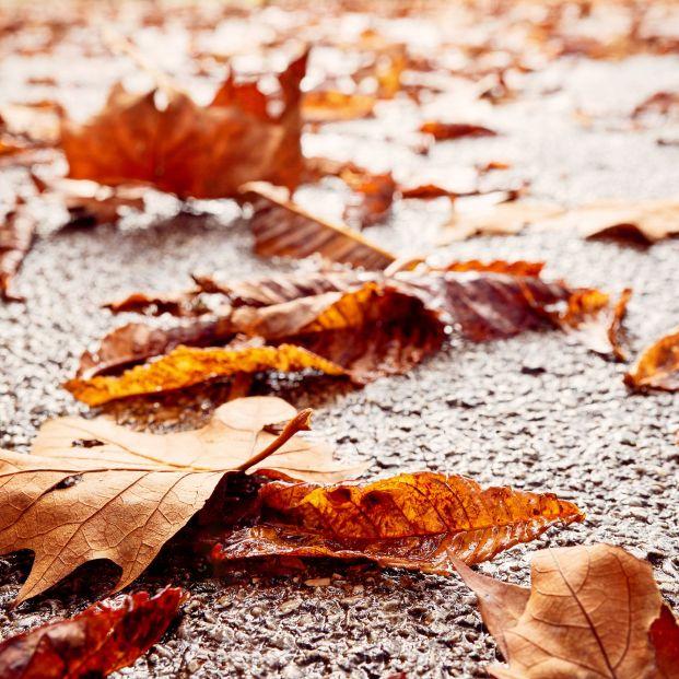 Comienza el otoño: cuál es el origen de esta palabra y refranes sobre la estación