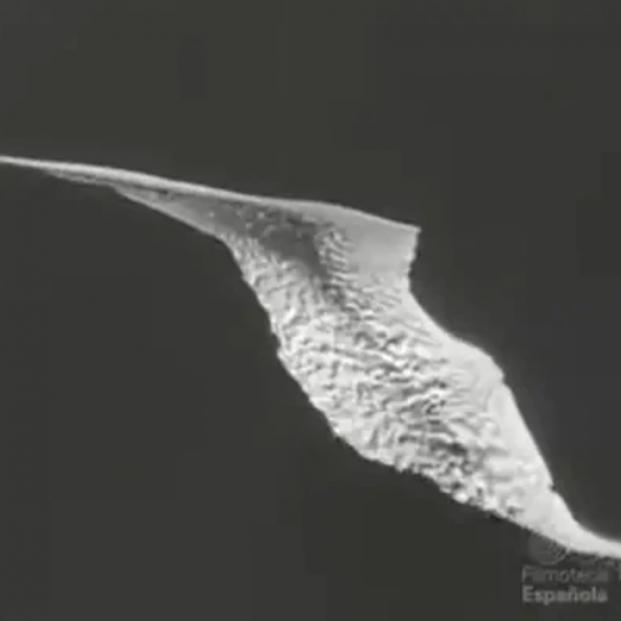 Estas son las imágenes que el NO-DO grabó en La Palma de la erupción en 1949 del volcán San Juan