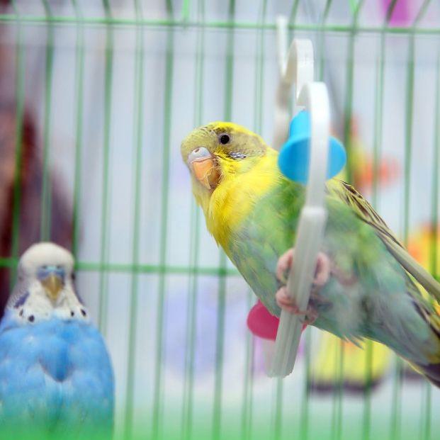 Accesorios para la jaula de tu pájaro (bigstock)