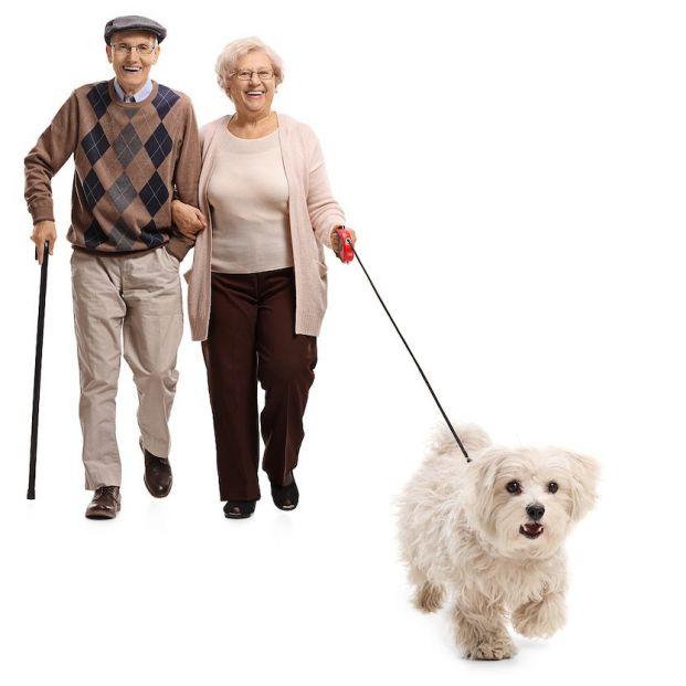 Las mejores razas de perro para jubilados