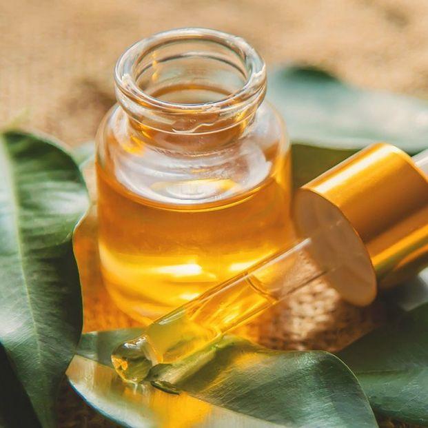 5 usos del aceite de árbol de té que no conocías