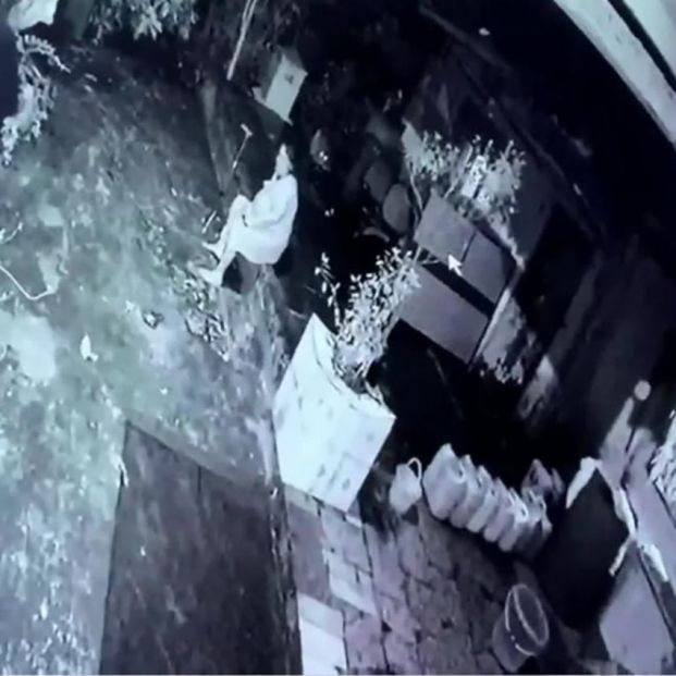 VÍDEO: Una mujer mayor consigue repeler el ataque de un leopardo gracias a su bastón